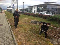 Policisté ohledávají místo, kde neznámý pachatel střílel na autobus MHD.