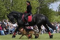 Druhý ročník koňské show bude v duchu středověku
