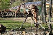 V plzeňské zoologické zahradě odstartovala hlavní sezóna