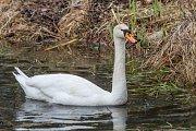 Jarní vycházka kolem Boleveckých rybníků