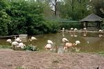 Návštěva v plzeňské zoo.