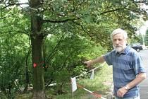 Předseda sdružení nájemníků bytů v Lábkově ulici Petr Pexa ukazuje jeden ze skupiny stromů, které podle stavebního povolení mají padnout za oběť novému parkovišti. Přitom se dá vymyslet rozumnější řešení se zachováním zelených krasavců