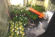 Pěstírnu marihuany odhalil Toxitým v Plzni na Slovanech.