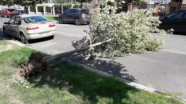 Přes třicet výjezdů kvůli silnému větru měli krajští hasiči během dopoledne ve středu 26. srpna. Nejčastěji to bylo kvůli spadlým stromům.