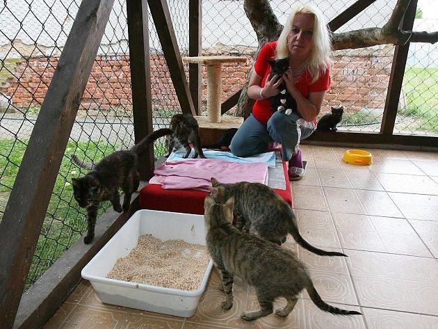 V současné době je v kočičím útulku více než třicet koťat. Na snímku je s nimi Helena Straková