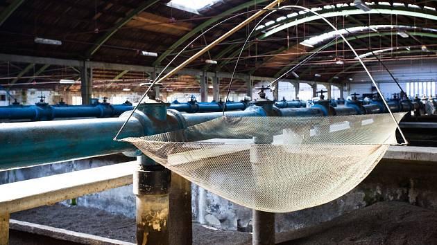 Specifická budova i voda. Tak hodnotí stav haly s chovnými nádržemi provozovatel rybích sádek Jan Mikač. Ryby zde prodává s manželkou.