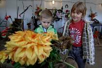 Výstava jiřinek přilákala v sobotu do zoo stovky návštěvníků. Královny podzimu, jiřiny, obdivují na fotce Martin a Danielka.