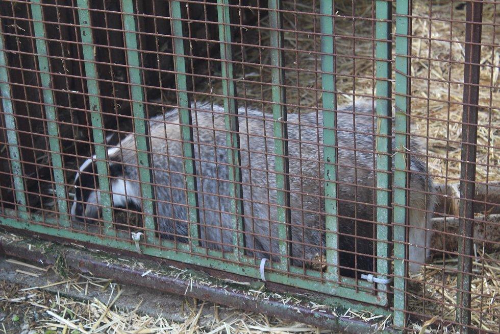Záchrannou stanici zvířat si prohlédly děti z Chebu.