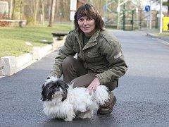 Shi-tzu Heřmánek. Pejsek se zotavuje v plzeňském psím útulku za pomoci své ošetřovatelky Radky Nádraské