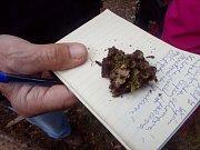 Mykologická exkurze u Konstantinových Lázní. Na snímku číšenka rýhovaná