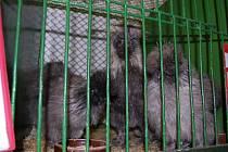 Každoroční výstava chovatelů drobného zvířectva přilákala o víkendu stovky návštěvníků do Želčan u Chválenic
