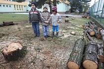 Na zahradě Mateřské školky v Křimicích zbyly po vzrostlých borovicích jen pařezy