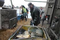 Rybáři lovili Drahotínský rybník