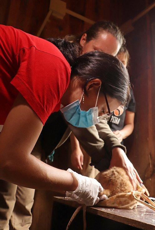 Mláďata rysa červeného byla ve středu prvně naočkována.