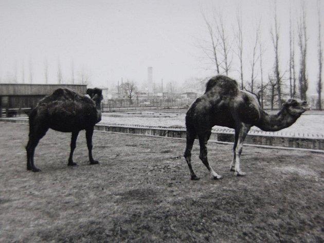Kaddáfí (vpravo) na archivním snímku plzeňské zoo