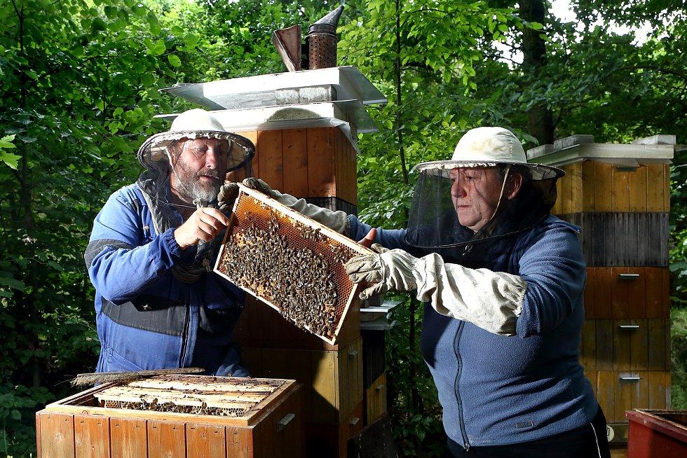 08 - Plásty z plodem se v úle nechávají. Od nakladení vajíčka se včela vylíhne za 21dní.