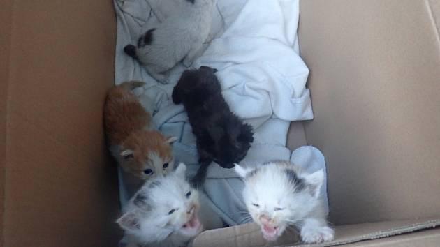 Pět malých koťat našla místní žena na návsi ve Lhotě.