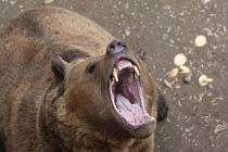 Medvědi Pišta, Miky, Honzík a Eliška z plzeňské zoo už jsou definitivně naladěni na jarní vlnu