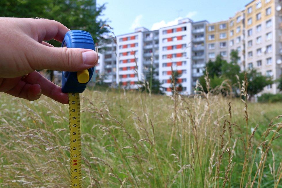 Neposekaný trávník ve vnitrobloku Brněnské ulice na sídlišti Vinice. Na některých místech dosahuje tráva více než šedesáti centimetrů.