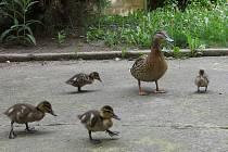 Rodinka na dvorku