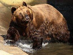Plzenští medvědi vstávají ze zimního spánku.