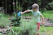 Děti se ve školce starají o bylinky.