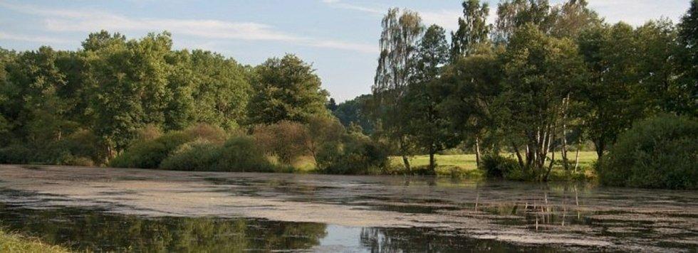 Bolevecké rybníky
