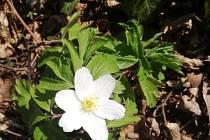 Jaro v zámeckém parku v Křimicích.
