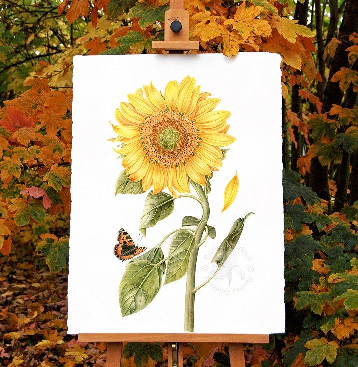 Z díla botanické umělkyně Pavlíny Kourkové.