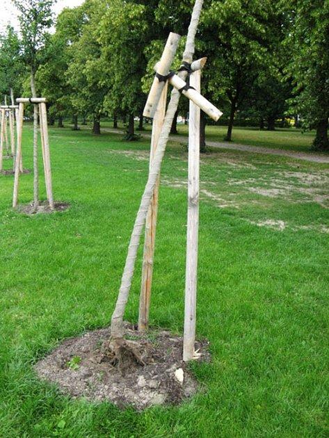 Strom, který krátce po otevření obnovené části Borského parku poničili vandalové.