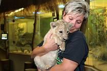 Ošetřovatelka Gabriela Czinnerová se lvicí Amirou