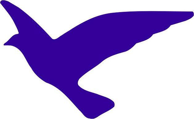 Problémy modrého ptáka v Plzni?