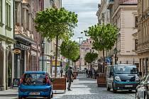 Plzeňskou Riegrovu ulici zkrášlilo osm javorů.