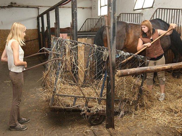 Prázdniny u koní nejsou jen o ježdění