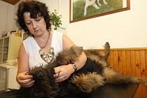 Plzeňská veterinářka Dagmar Caltová řeší ve své ordinaci téměř každý den případy, kdy domácí mazlíčci vlivem tepla zkolabovali nebo uhynuli poté, co je nezodpovědní páníčci nechali v autě na přímém slunci
