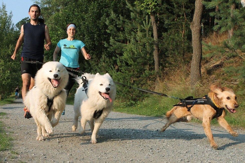 Plzeňané míří na nejtěžší závod světa v běhu se psem