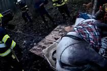 Záchrana vyčerpaného koně z lesa u Přešína.