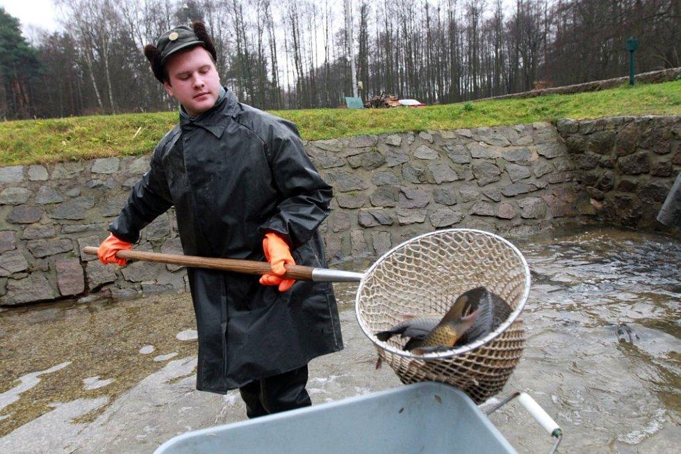 Rybář hrne z vody kapry do nádoby.