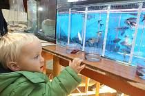 Hlavně nejmenší návštěvníci se od rybiček nemohli odtrhnout