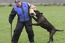 Psi předváděli zadržení