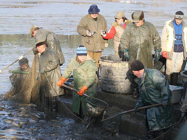 Kapři a amuři z městského rybníka Drahotín putovaly hlavně do sádek. Na místě se jich ze 110 metráků prodalo dvaadvacet
