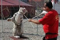 Cirkus Berousek na Denisově nábřeží