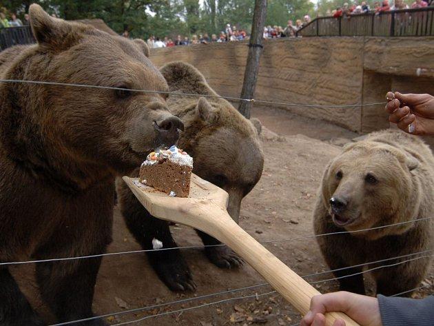 Huňáči dostali šlehačkový dort podávaný na dlouhé dřevěné lopatě.