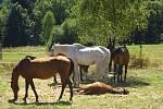 Šest podvyživených koní odebrala veterinární správa nezodpovědné majitelce.