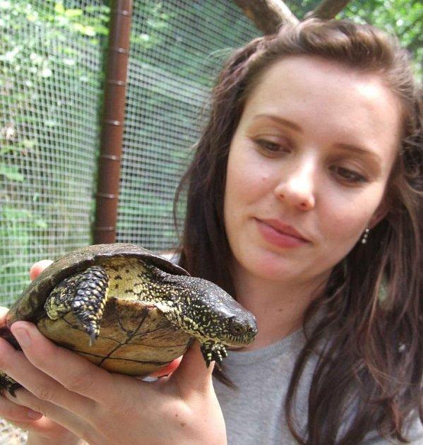 Želva bahenní, která se našla u Nezvěstic.