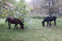 Koně se pásli na zahradě seniorky.