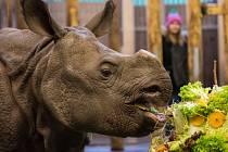 Maruška v zoo Plzeň oslavila své 2. narozeniny