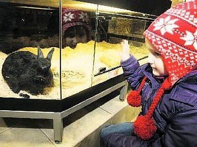 KRÁLÍČEK JAKO DÁREK. Starost o zvíře není pro každého, pokud lidé dostanou domácího miláčka, kterého nechtěli, nejdřív se ho snaží vrátit původním majitelům, potažmo zverimexu.