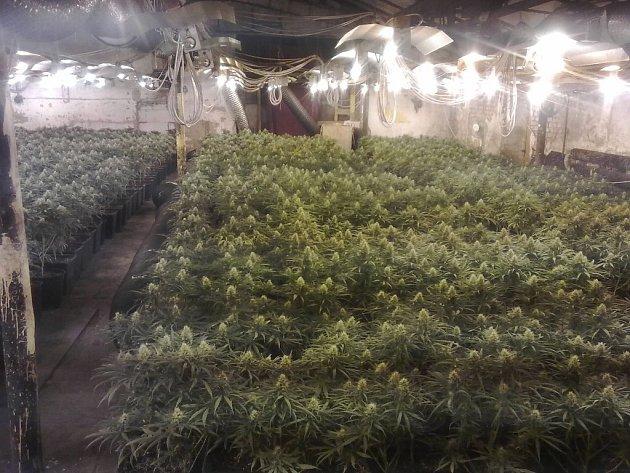 Pěstírna marihuany v Dobřanech
