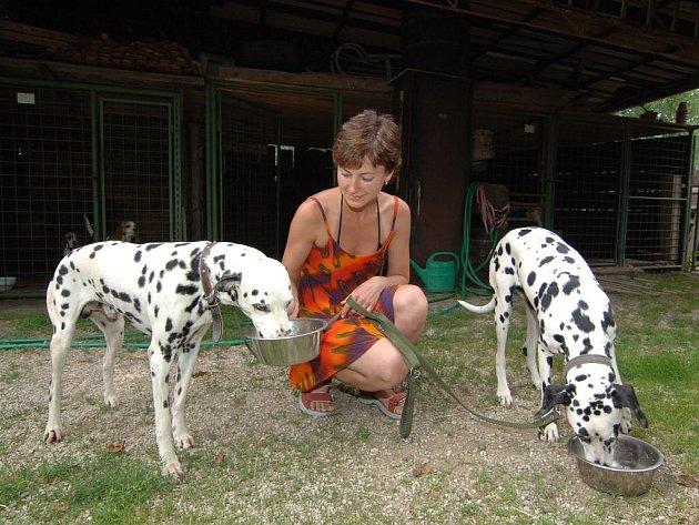 Některé ze psů, jejichž majitelé odjedou na dovolenou, čeká přechodný azyl v některém ze psích hotelů. V Psí škole v Třemošné se o čtyřnohé  stará majitelka Hana Kremlová